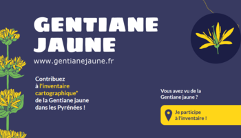 Md invent gjaune2