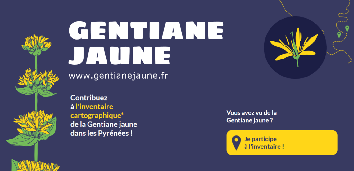 Xl invent gjaune2