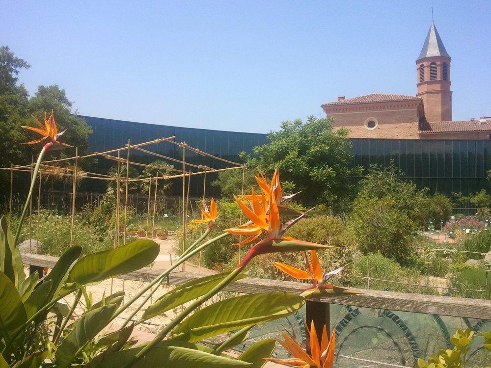 Le jardin botanique henri gaussen jardin universitaire de for Jardin universitaire
