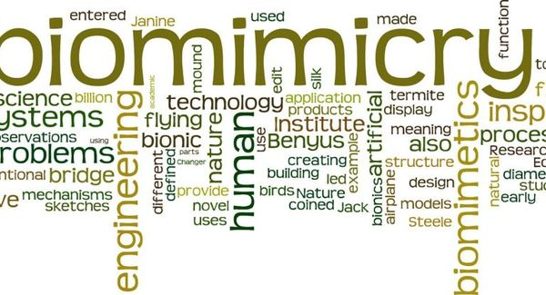 Lg biomimicry wordcloud 1