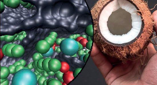 Comment l'écorce de noix de coco est utilisée pour stocker l ...